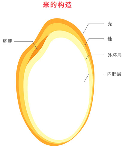 Structure of a Rice Grain